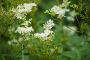 flower-5457754_1920
